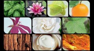 pop_Wella_Elements_Fragrance_d-300x163